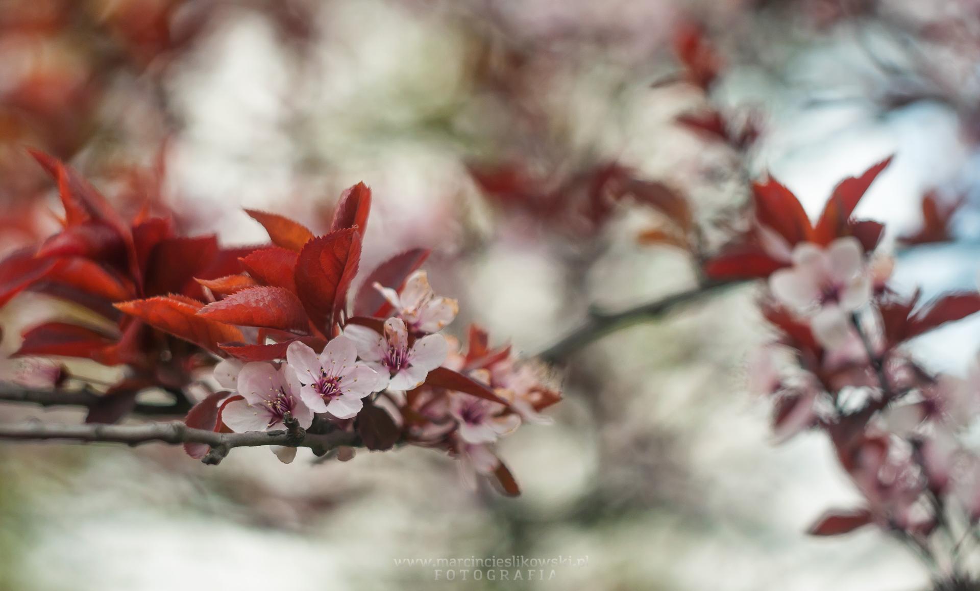 Czerwona wiosna