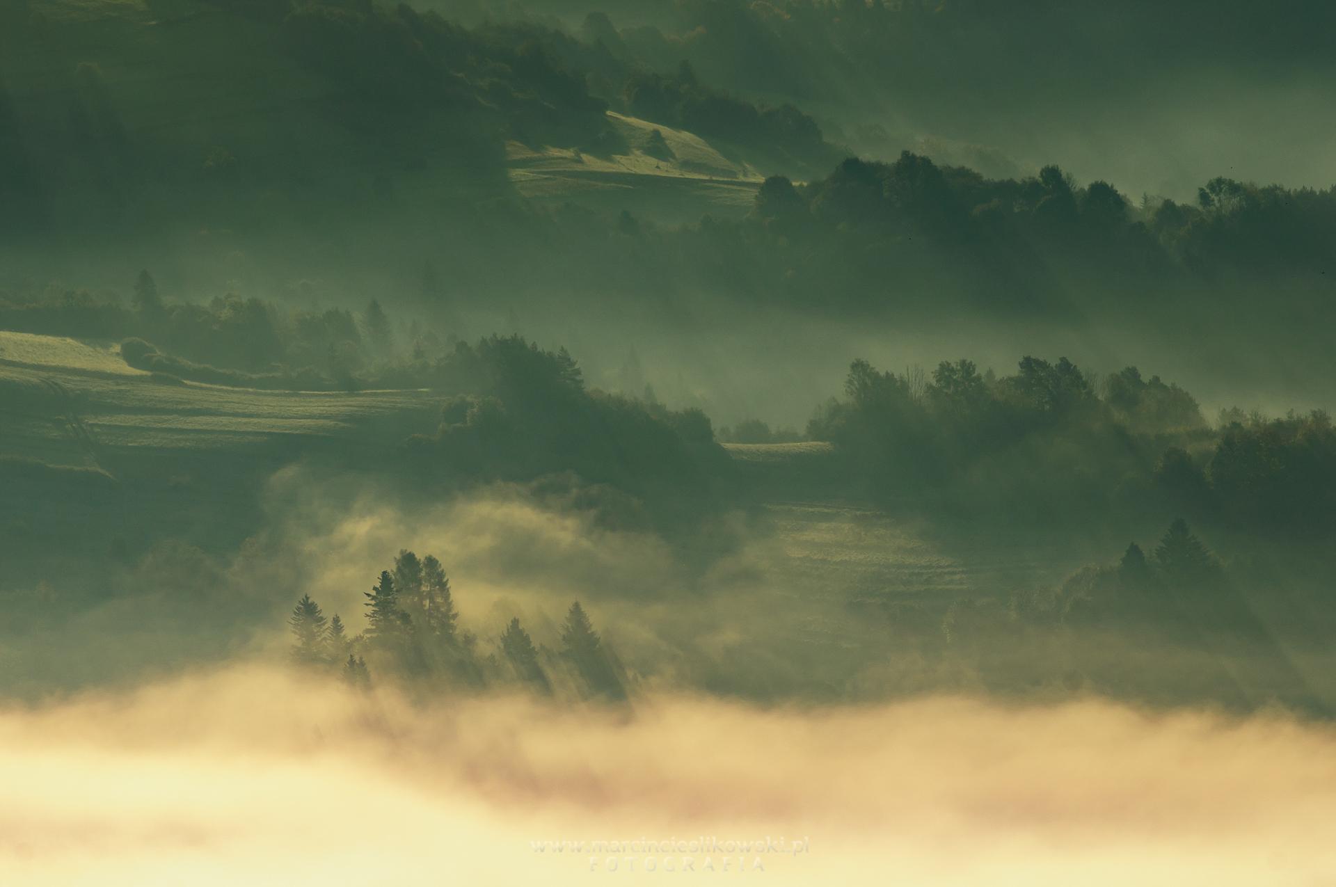 Drzewo wśród mgieł